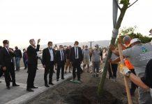 Balıkesir Büyükşehir Belediyesi, yürüyüş yollarından bisiklet parkuruna, kent mobilyalarından aydınlatmasına kadar çalışmalarını sürdürdüğü Edremit Altınkum bölgesinde 80 çınar ağacı ve 30 palmiyeyi toprakla buluşturuldu.