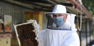 """Büyükşehir Belediyesi, salgın süresince sıkça gündeme gelen propolis üretimini artırmak için şehirdeki bin 150 arı üreticisine 11 bin 500 adet propolis tuzağı desteği verdi. Düzenlenen dağıtım töreninde konuşan Başkan Yücel Yılmaz, """"Balıkesir'in balı kalitelidir, hilesizdir dedirtecek güveni sizlerle birlikte tesis edeceğiz"""" dedi."""