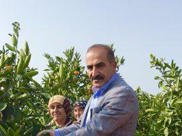 Satsuma 52 milyon dolarlık ihracatla en çok tercih edilen mandalina oldu